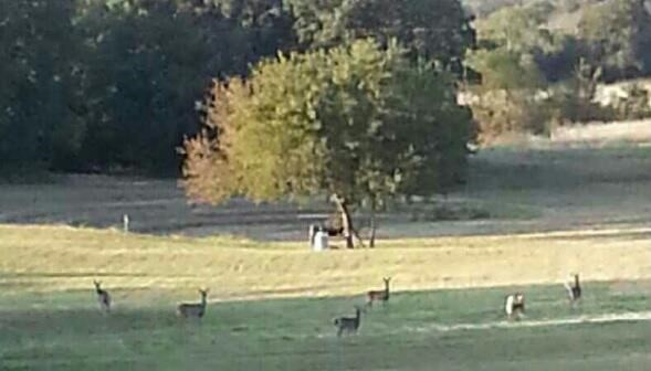 Deer roaming on the property