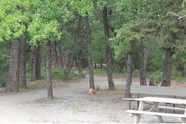 Wooded area between dorms & dining hall